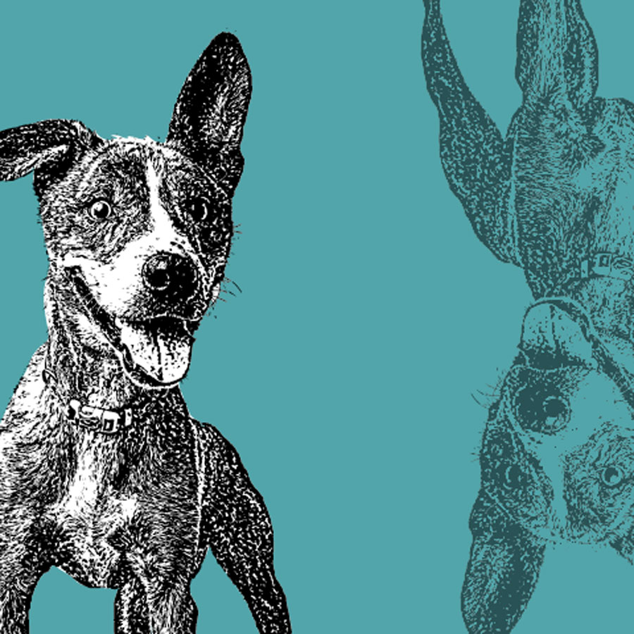 Fun sketch of a happy black and white dog with perked up ears on a teal background
